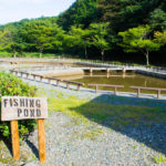 和島オートキャンプ場_釣り堀